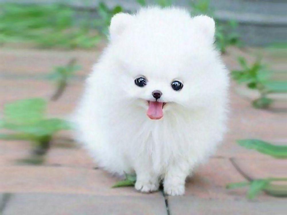 Gambar Anak Anjing Yang Lucu