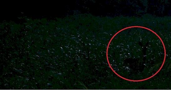 Kamu jenius jika bisa menemukan rusa dalam 6 foto ini, coba aja!