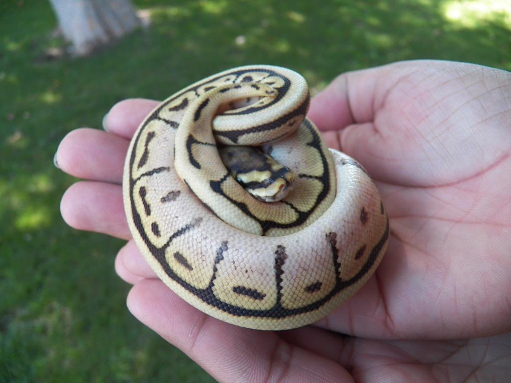 10 Jenis reptil cantik ini layak dipelihara, kamu suka yang mana?