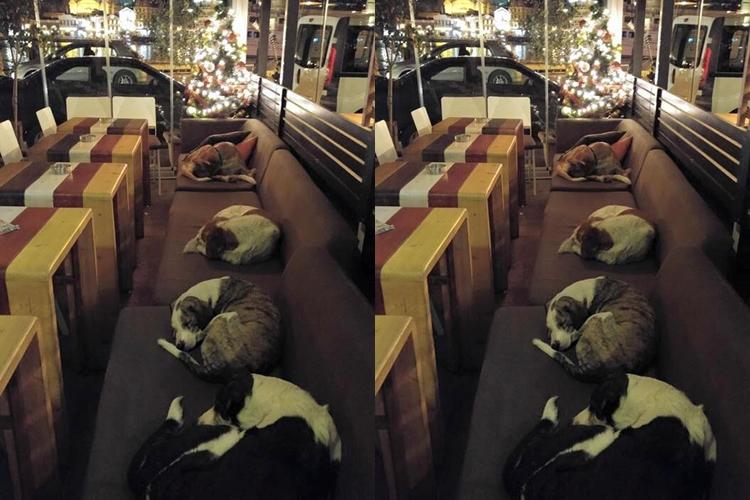 Kafe ini 'buka' hingga dini hari agar anjing jalanan bisa tidur