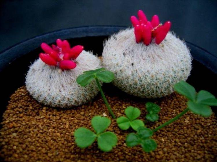 18 Kaktus Imut Di Berbagai Macam Pot Ini Dijamin Bikin Kamu