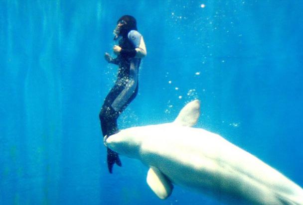 8 Peristiwa luar biasa hewan menyelamatkan manusia dari maut, wow!