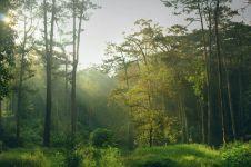 Karawang bakal miliki taman hutan raya seluas 1.000 hektare, wow!