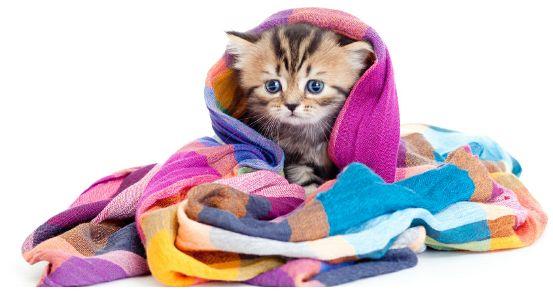 Awas, 7 penyakit ini sering serang kucingmu saat musim hujan, nah lho!