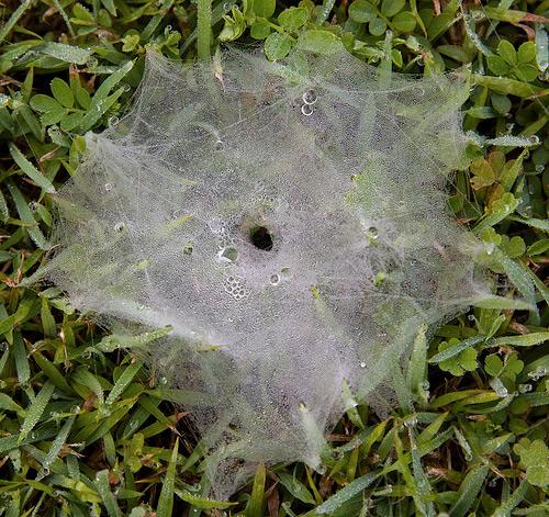 Jaring laba-laba bisa menjadi objek keren fotografi, ini buktinya!
