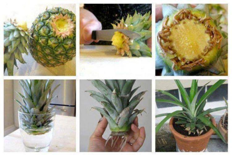 16 Trik Mudah Menanam Buah Dan Sayuran Di Halaman Rumah