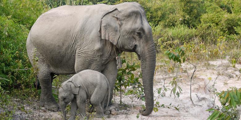 Pengen selfie bareng gajah, nasib remaja ini berujung tragis