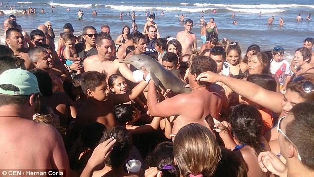 Lumba-lumba langka ini mati akibat dipaksa selfie wisatawan, kejam!