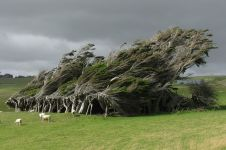 15 Pohon ini paling indah sejagat, bikin mata kamu nggak berkedip!