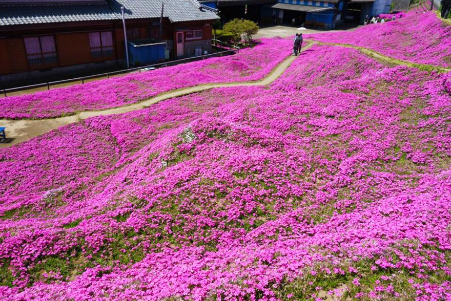 Pria ini 2 tahun menanam ribuan bunga untuk istrinya yang buta