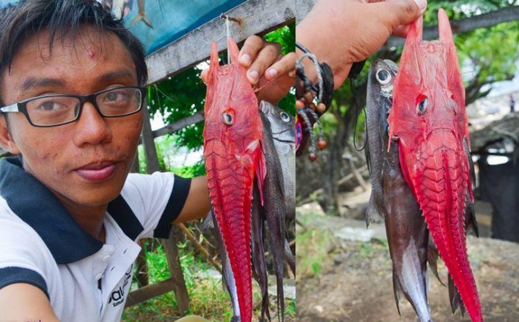 Ikan merah bertanduk ini ternyata sangat langka, kamu tahu namanya?