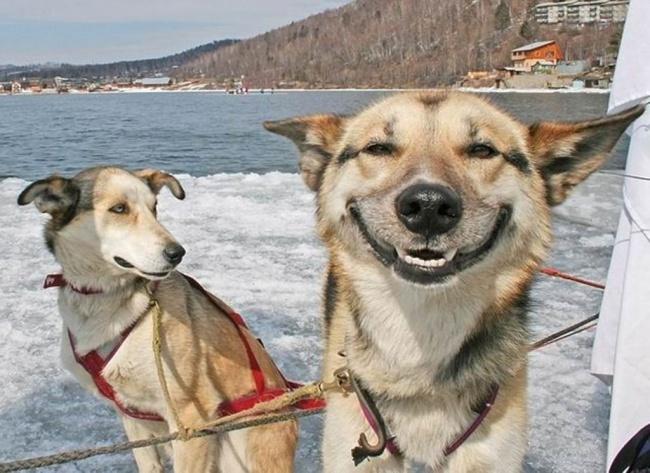 11 Ekspresi aneh anjing ini justru menggemaskan, iya nggak?