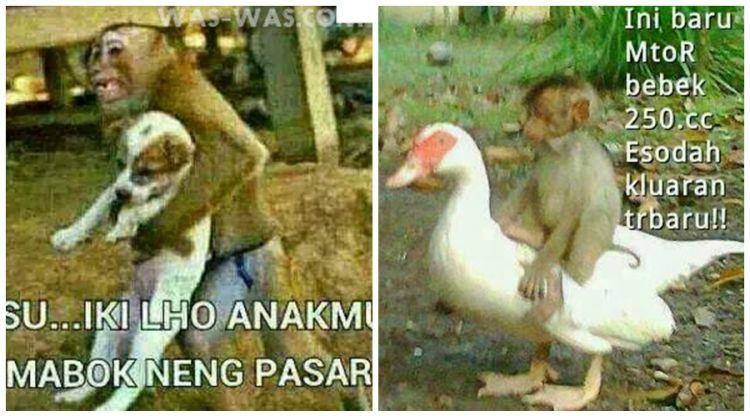 25 Meme Kelakuan Lucu Monyet Yang Bikin Ketawa Ngakak