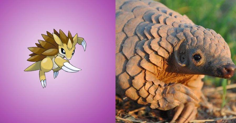 13 Hewan Pokemon ternyata ada di dunia nyata, nggak nyangka kan?