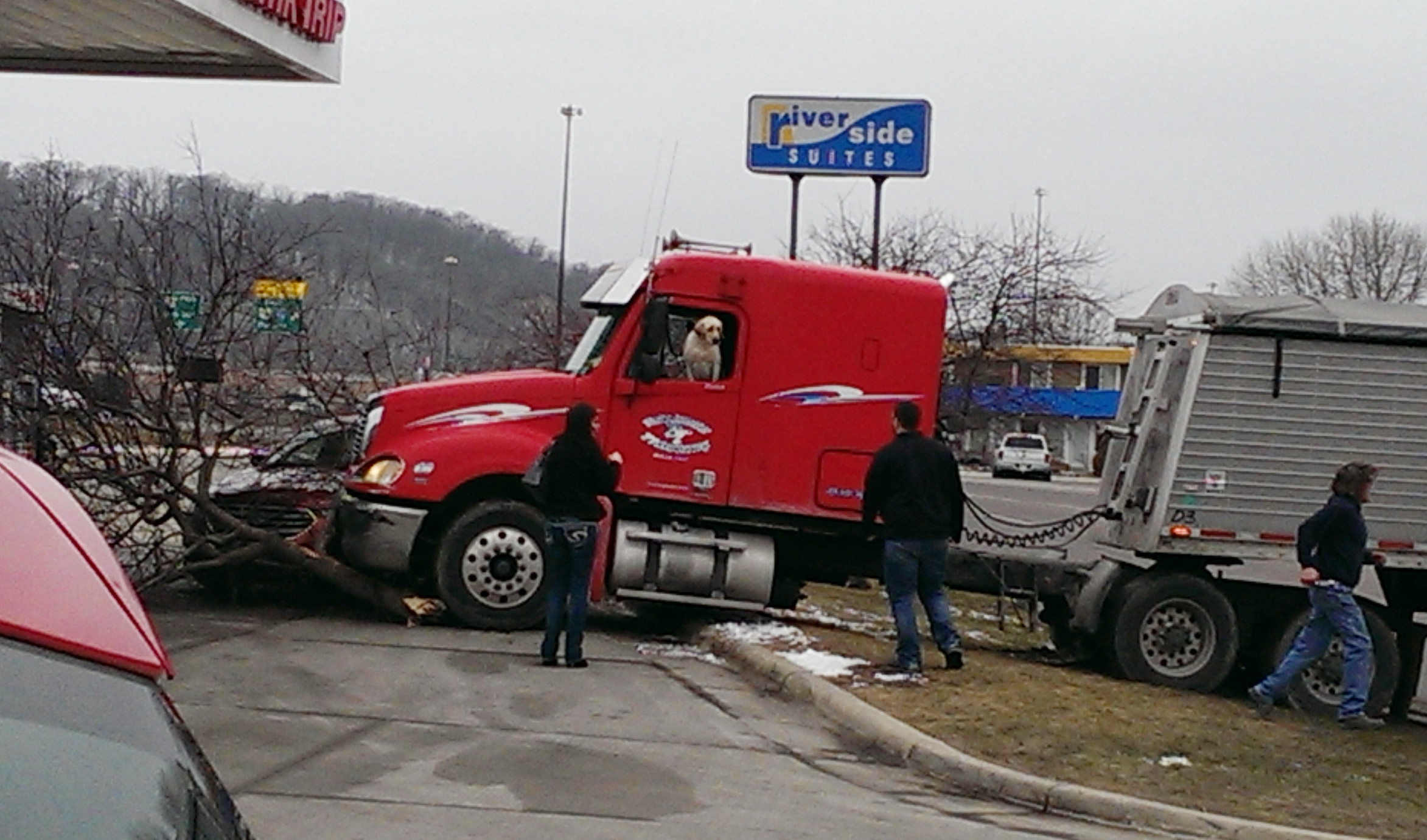Aneh tapi nyata, seekor anjing mengemudikan truk kontainer
