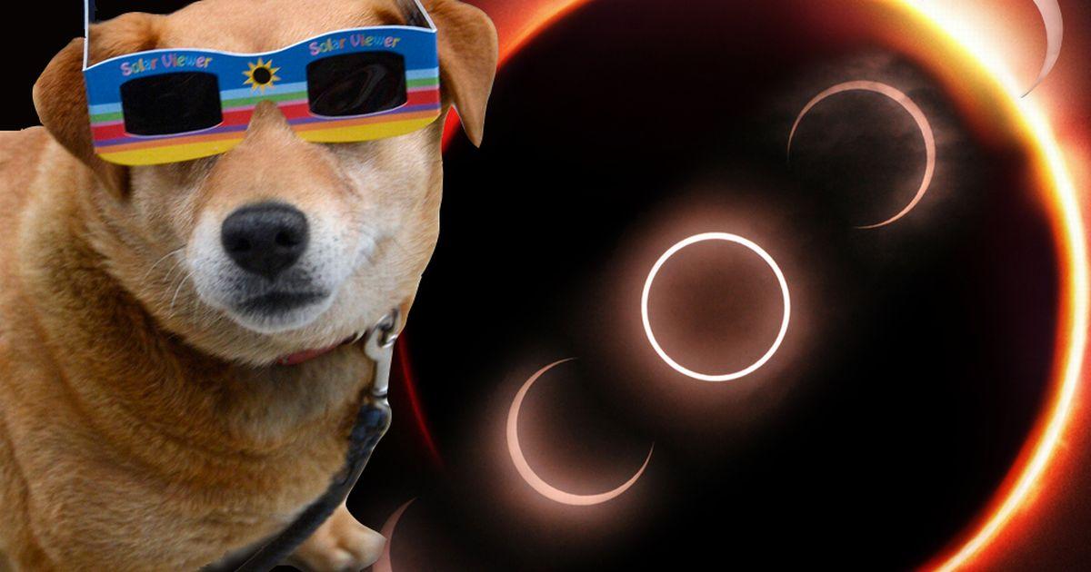 Begini perubahan perilaku hewan saat gerhana matahari tiba