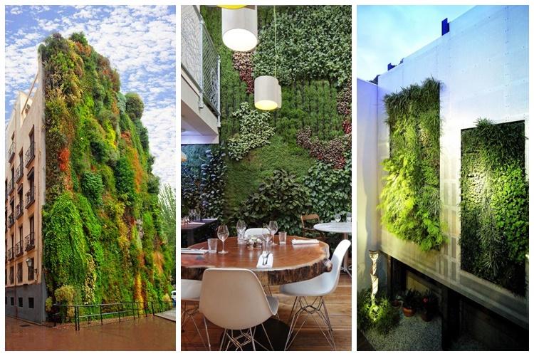 Hiasi dinding pakai wallpaper itu biasa! Pakai tanaman, baru keren!