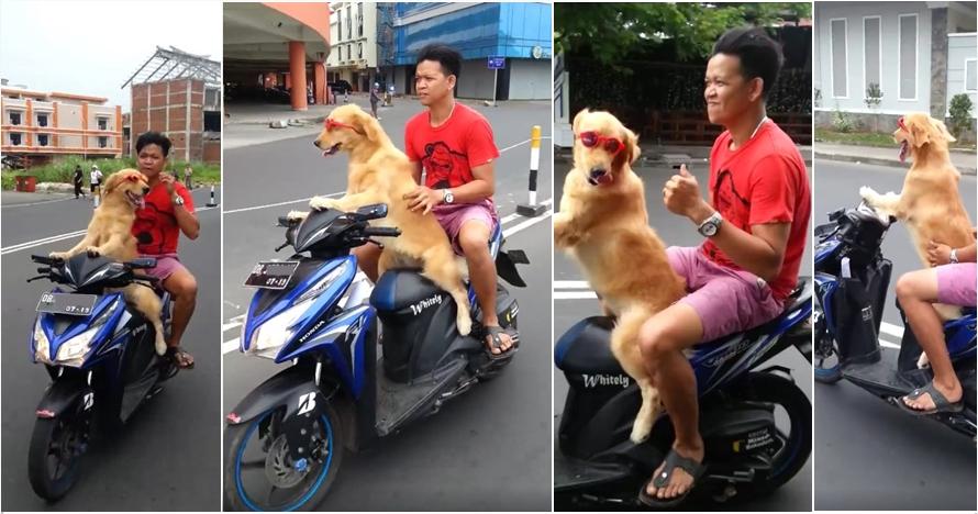 Kocak namun berbahaya, anjing ini kendarai motor dengan santainya