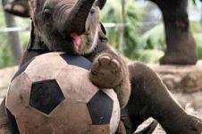 15 Foto lucu kelakuan bayi gajah ini bikin harimu cerah ceria, gemas!