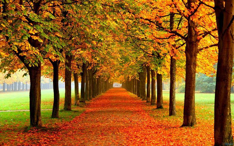 31 Pemandangan Hutan Pohon Saat Bergantian Musim Seme