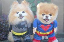 Ramai film Batman v Superman, hewan-hewan ini juga ikutan jadi Batman