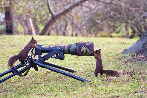 24 Hewan ini bergaya ala fotografer profesional, bikin gemas ya!