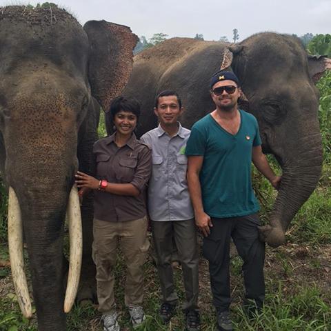 DiCaprio: Hutan hujan di Leuser salah satu yang terbaik di dunia
