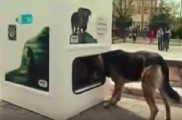 Negara ini menyediakan 'ATM' khusus bagi hewan, seperti apa?