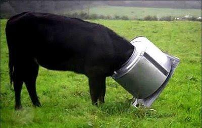 17 Tingkah lucu hewan ternak ini bikin kamu tambah sayang binatang