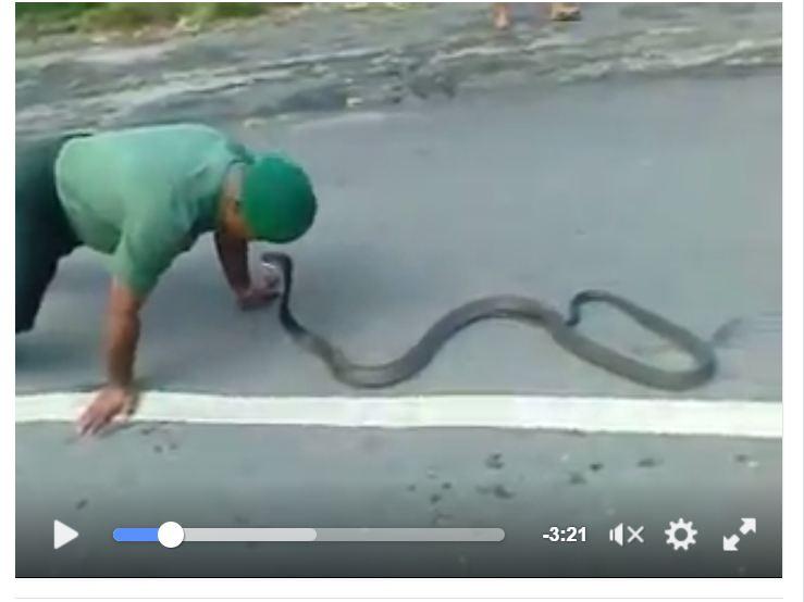 Prajurit TNI 'mainkan' ular berbisa ini dengan santai, wow!