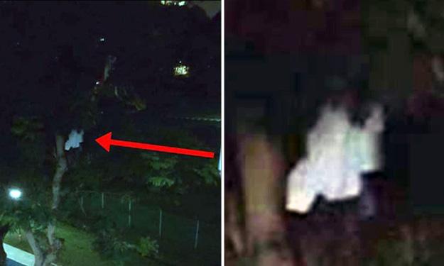 Sosok berbaju putih gelantungan di pohon bikin geger netizen, serem!