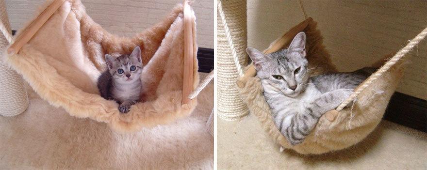21 Foto before & after kucing dari kecil sampai dewasa, bikin gemas!
