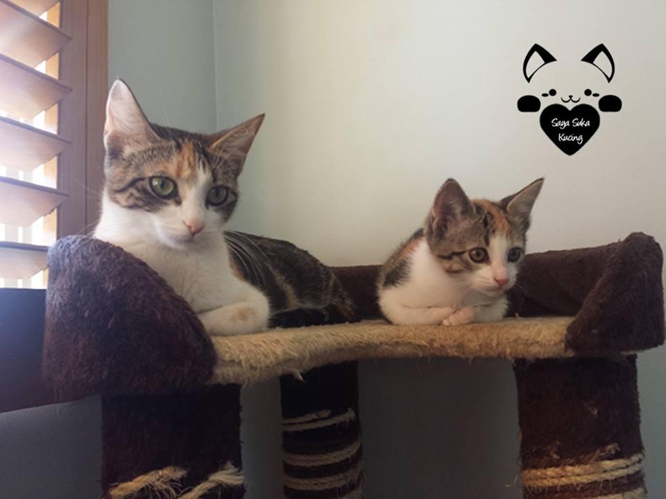 26 Foto Momen Kebersamaan Induk Dan Anak Kucing Ini Bikin