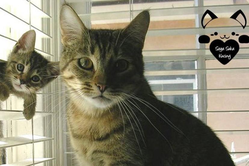 26 Foto momen kebersamaan induk dan anak kucing ini bikin gemas