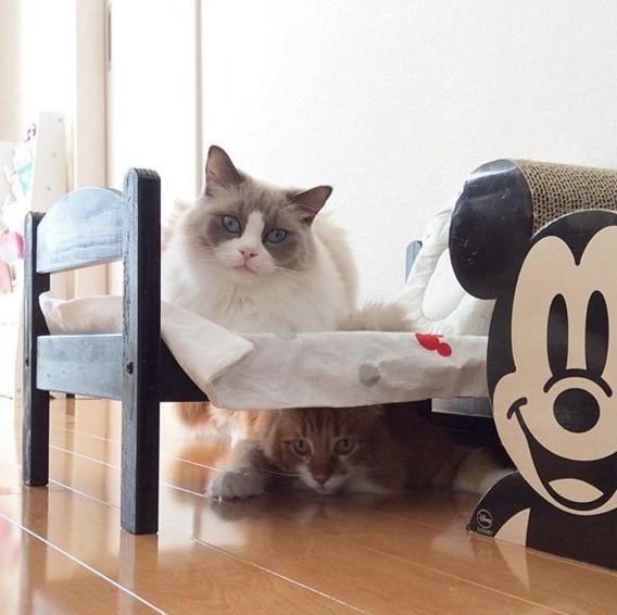 15 Desain Tempat Tidur Untuk Kucing Kesayangan Lucu Banget