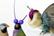 Pernah lihat burung didandanin? Ini 11 foto burung yang fashionista