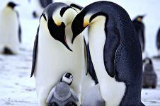 Bikin melongo, penguin ternyata juga bisnis prostitusi seperti manusia
