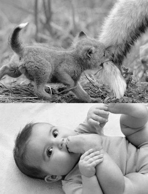 bayi rubah © 2016 brilio.net