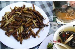 Begitu melihat, 13 makanan menjijikkan ini bikin nafsu makanmu hilang!