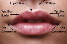 Pernah merhatiin lekukan antara hidung dan bibir? Ini lho fungsinya!
