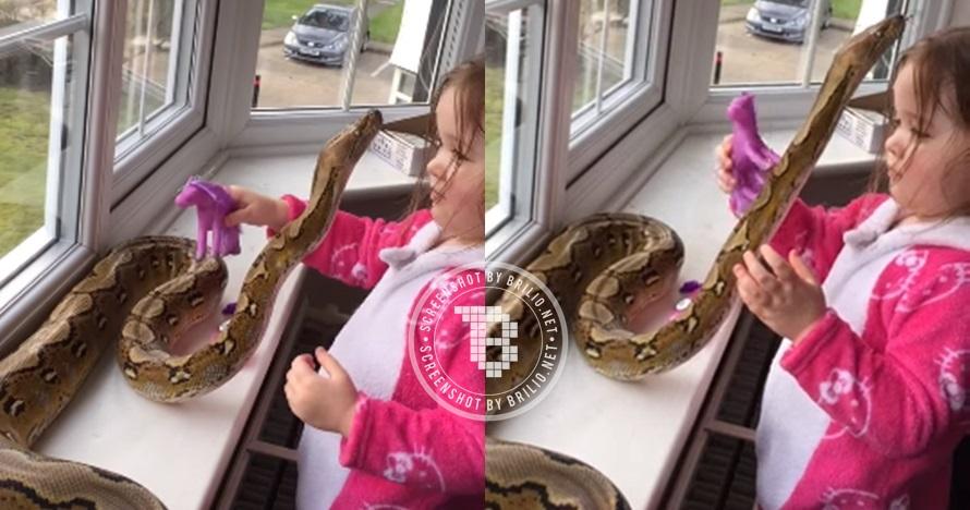 Balita ini santai bermain dengan ular piton, kamu berani nggak?