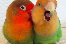 11 Foto ini buktikan lovebird itu simbol cinta sejati!