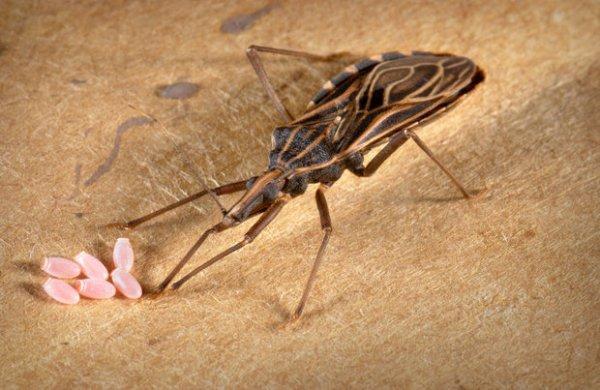 7 Kondisi mengerikan akibat gigitan serangga, segera obati ya!