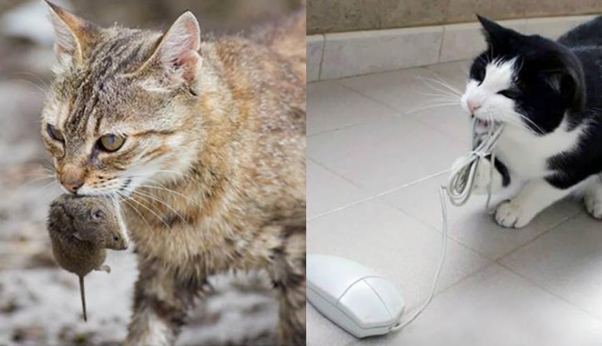 14 Beda tingkah kucing jadul dan kekinian ini bikin geli sendiri