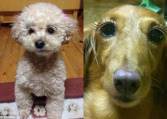 9 Anjing ini memakai bulu mata palsu, wah makin cetar membahana!