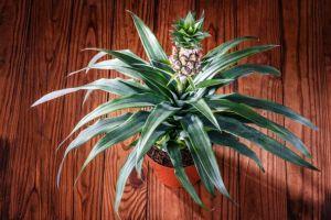 15 Tanaman buah ini bisa tumbuh indoor, bikin rumahmu lebih adem!