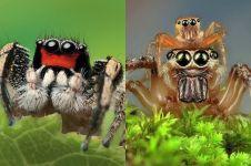 Begini 13 rupa laba-laba jika foto close up, mengerikan mirip monster!