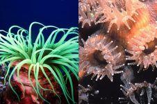 7 Hewan laut ini sering disangka tumbuhan, kamu juga pernah keliru?