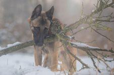 14 Foto bukti burung hantu & anjing bisa sahabatan, bikin haru!