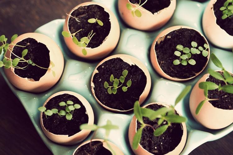 7 Manfaat kulit telur, salah satunya sebagai pupuk organik